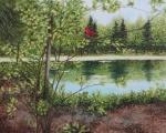 Mullin Pond in Summer