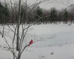 Mullin Pond in Winter