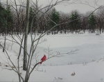 Mullin Pond in Winter